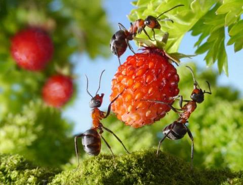 Вас донимают муравьи? Избави…