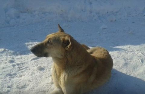 Омскому псу без передних лап…