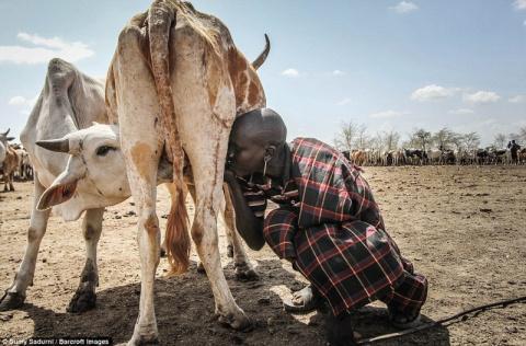 Это африканское племя погибает от засухи