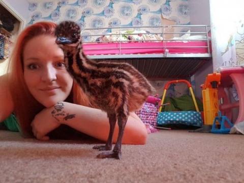 Из купленного в Сети яйца женщина растит страуса
