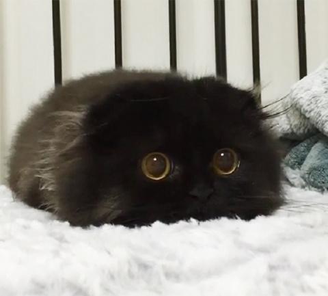 Милота маленьких котят