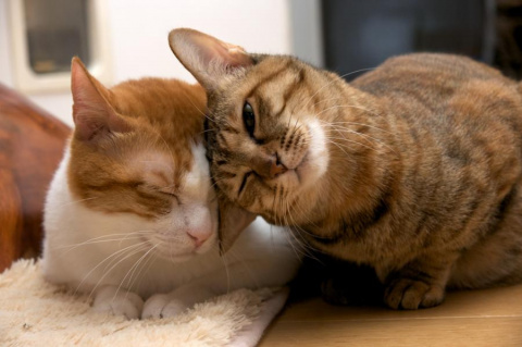 Учёные развеяли миф об эгоизме кошек