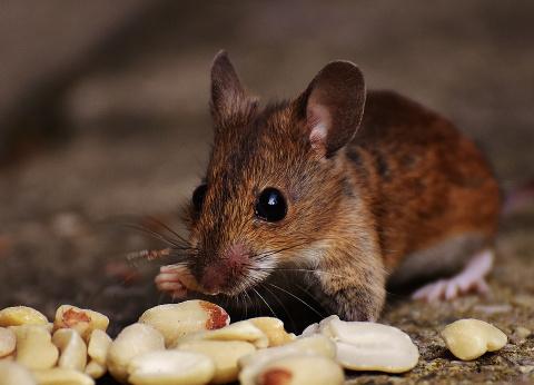 Благодарный мышонок! Невероятная история читательницы о крошке, которая тоже – маленькая жизнь!