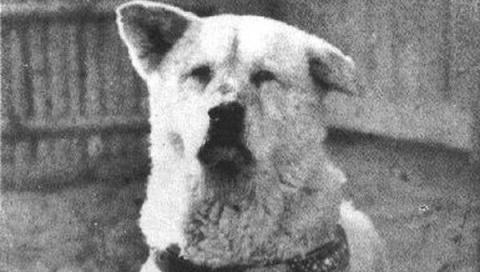 Человек и собака. Истории самой бескорыстной дружбы