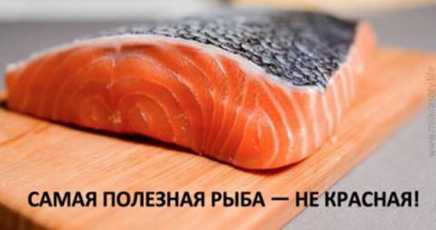 Самая полезная рыба — не красная!