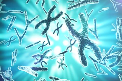 Найден способ избавить клетки человека от лишних хромосом