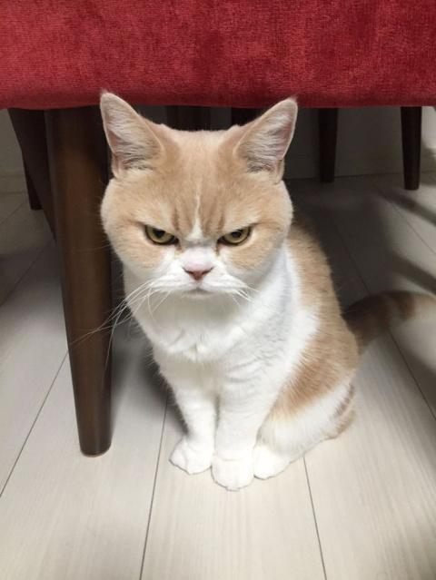 Коюки - новый хмурый кот, по…