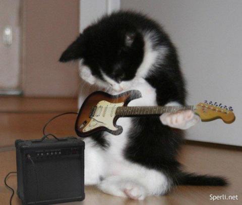 Кошачий концерт встречает эту девушку каждое утро! Хор из 12 кошек под одной крышей