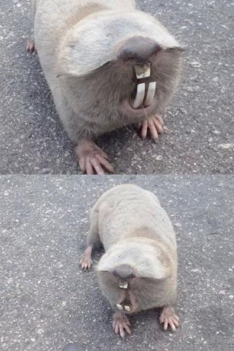 Знаете что это за ослепший зверек?