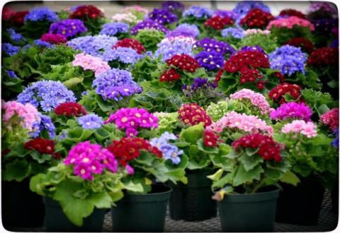 Рассада цветов в феврале и н…