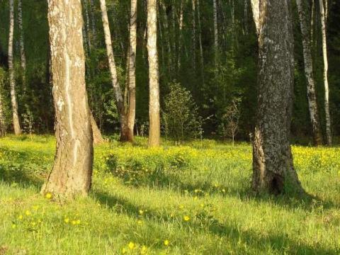 Странная солнечная полянка в лесу