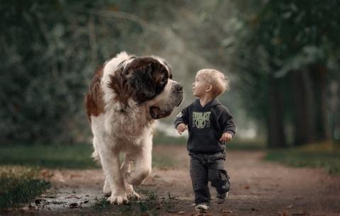 Большие собаки и маленькие дети