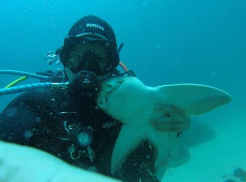 Эта акула обнимается с дайвером каждый раз, когда он спускается под воду