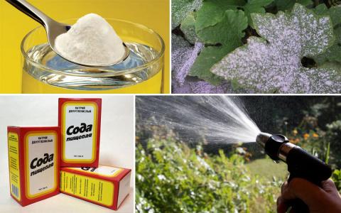 Как защитить растения от бол…