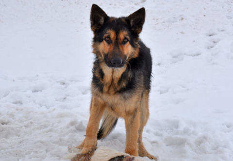 Возле Слуцка пёс несколько дней охранял свою погибшую «подругу»