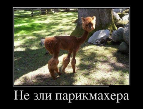 Веселые фото из жизни))