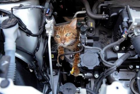 Кошка под капотом