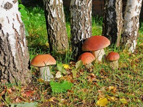 Cамая большая ТАЙНА: энергия грибов, которые мы едим