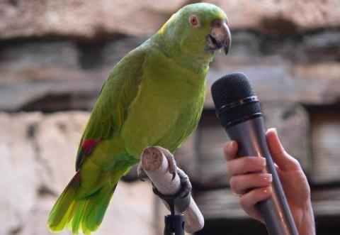 Не ждали? Вас попугаи сдали!…