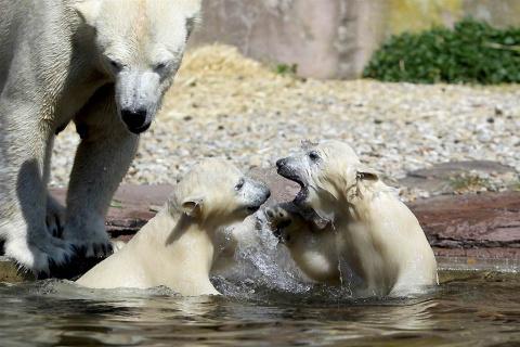 Животные и их детёныши (фото подборка)