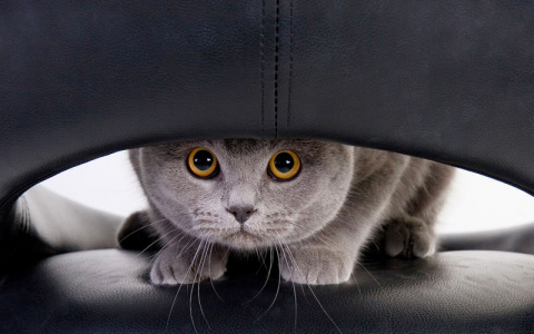 Как избавиться от кошачьих м…