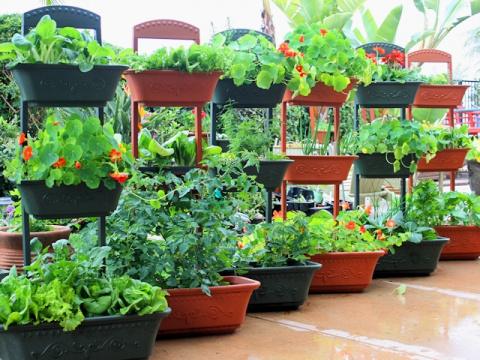 Овощи в контейнере – экономный огород