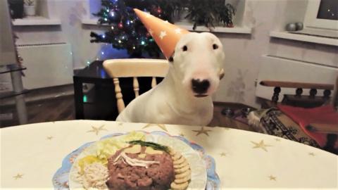 Приколы с собаками за начало декабря ( смешные и милые питбули )