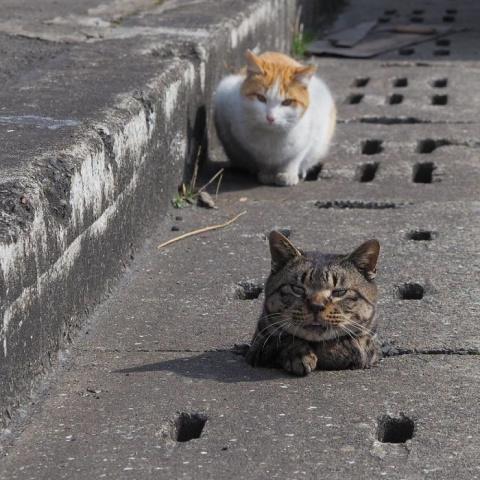 Котики в норках — юмористиче…