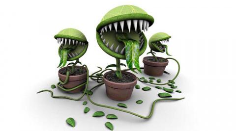 Комнатные растения опасные для здоровья