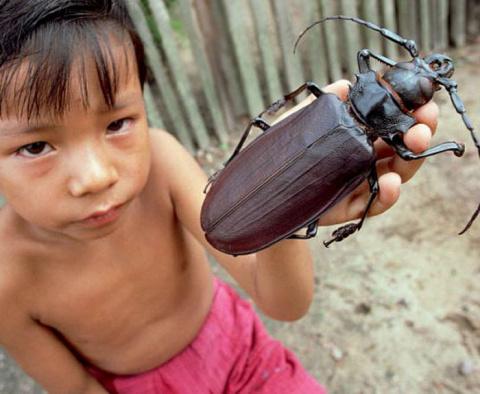 Гигантские насекомые (16 фото)