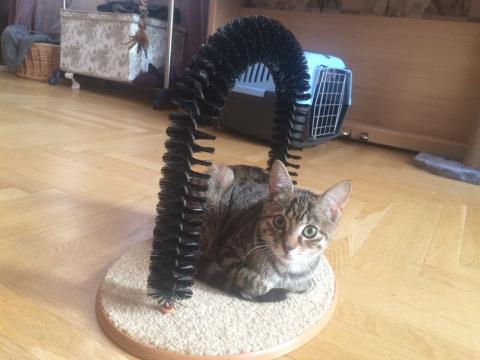 Кошачье самообслуживание