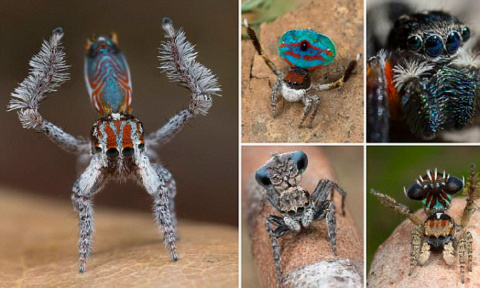 Самый красивый паук обитает …