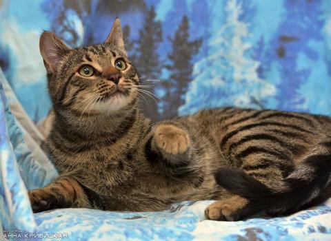 Котёнок-тигрёнок ищет любящих родителей!!!