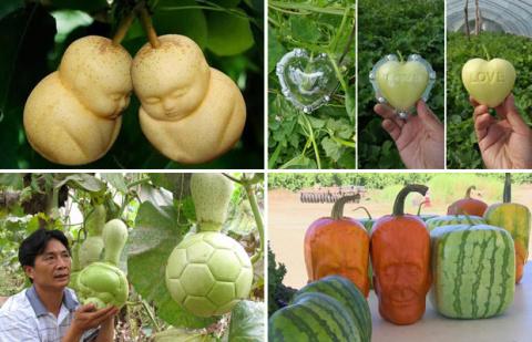 Необычные овощи и фрукты от …