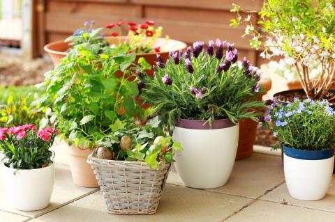 Простые способы избавления от вредителей в цветочных горшках