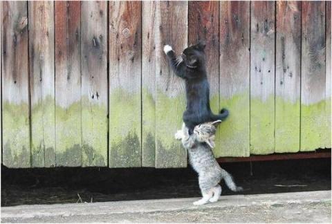 Смешные картинки:)))))