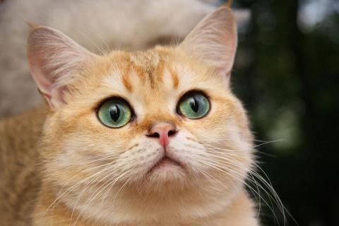 Хроническая почечная недостаточность у кошек. Собачий век недолог... жаль...