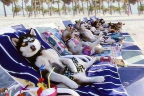 Собаки – на пляже валяки