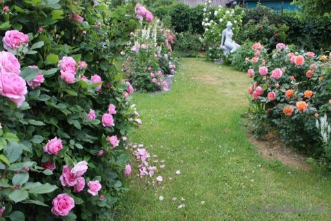 Сад Алеси