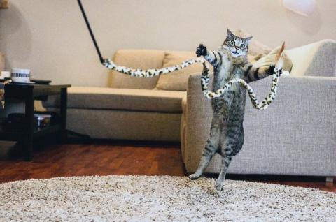 Забавные и симпатичные котик…