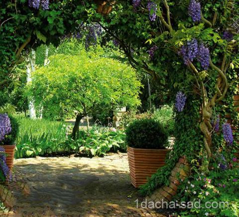Укромный уголок в саду на даче — 7 идей уединения от посторонних глаз