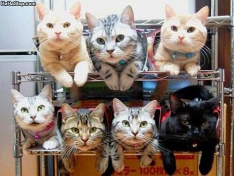 Как правильно хранить котов)))