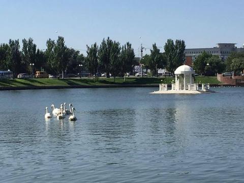 Неизвестный астраханец подкинул 7 лебедей в местный пруд