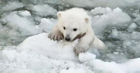Мама-медведица пыталась спас…