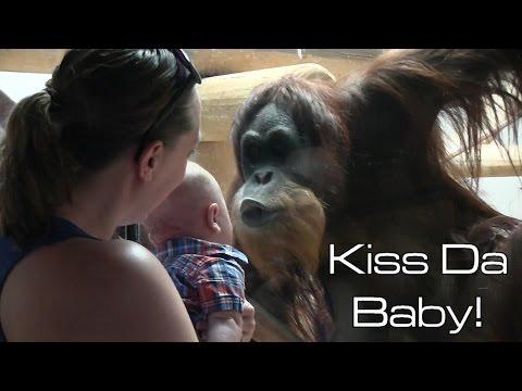 Орангутан увидел ребёнка и с…