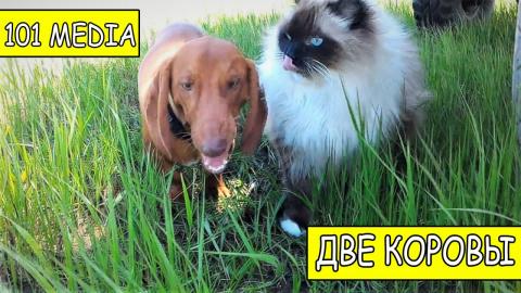 Русское Видео про собак и ко…
