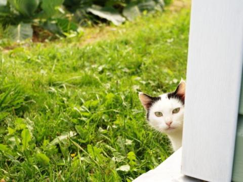 Тихую кошку привезли на дачу…