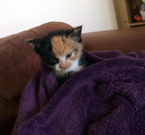 Я уеду жить в одеяло...