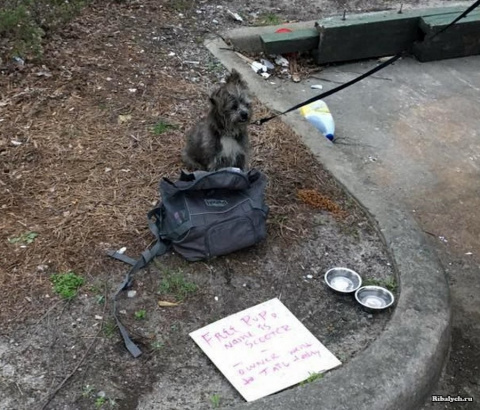 История брошенной собаки: «С…