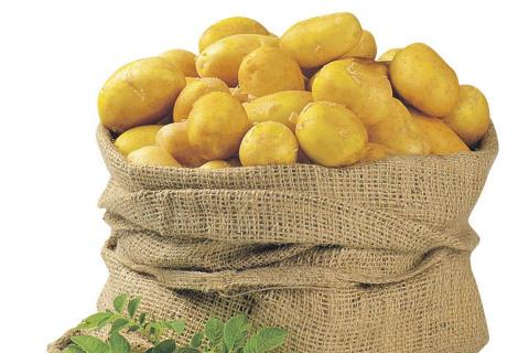 Лучшие сорта семенного картофеля для Подмосковья